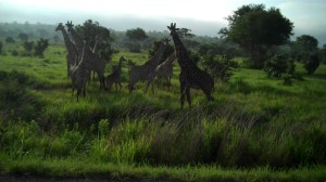 giraf 13s